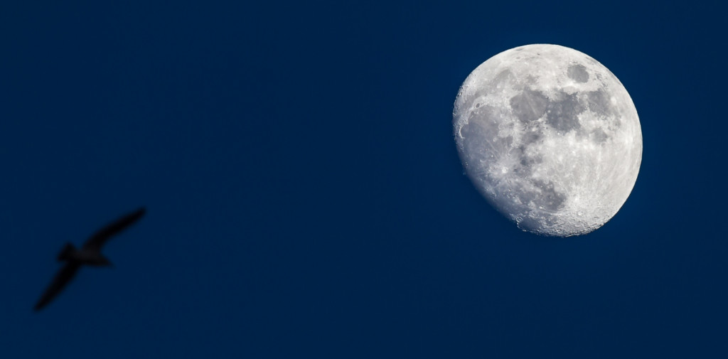 1/125, f/9, ISO 100, 600mm on 7D